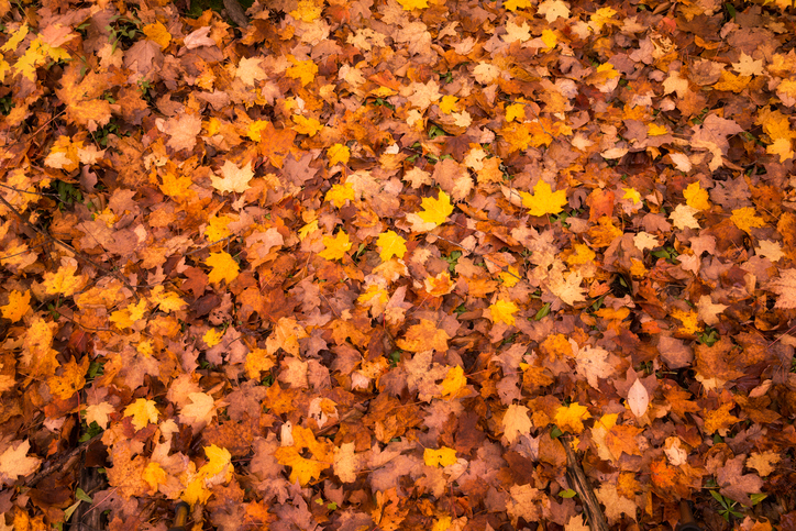 How Fall Leaves Affect Your Water Quality
